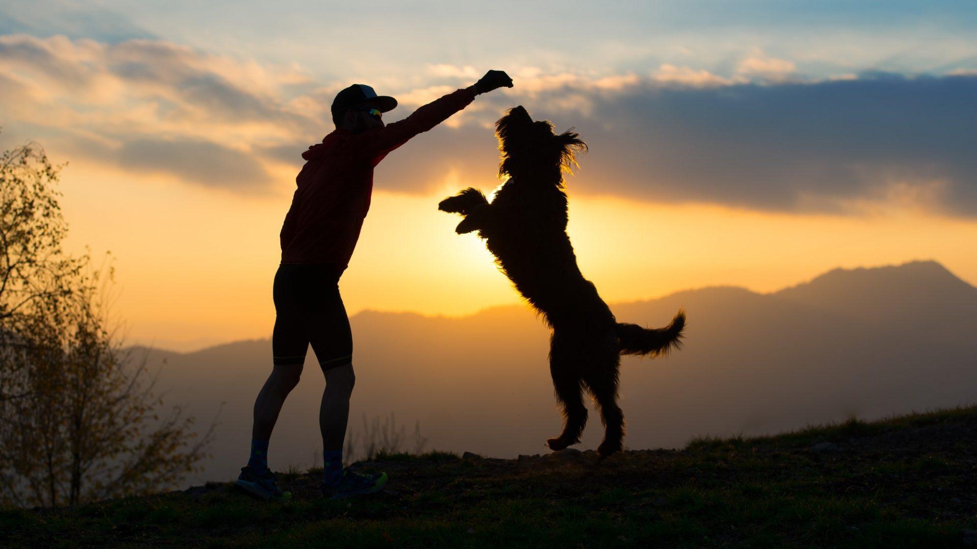 חינוך כלבים